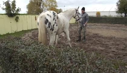 Leidenschaft Pferd